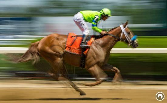 آموزش شرط بندی در مسابقات اسب سواری + ترفندهای برد و اصطلاحات